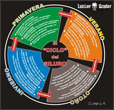 CICLO-DEL-SILURO-2