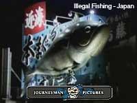 pesca-ilegal_1