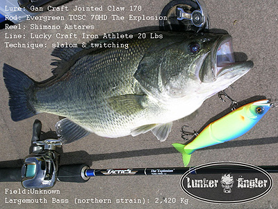jointed-claw-big-bass1