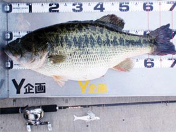ikehara-bass-2