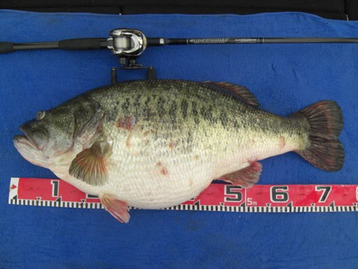 world-record-bass-lake-biwa