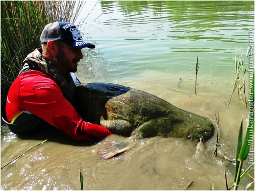releasing-big-catfish